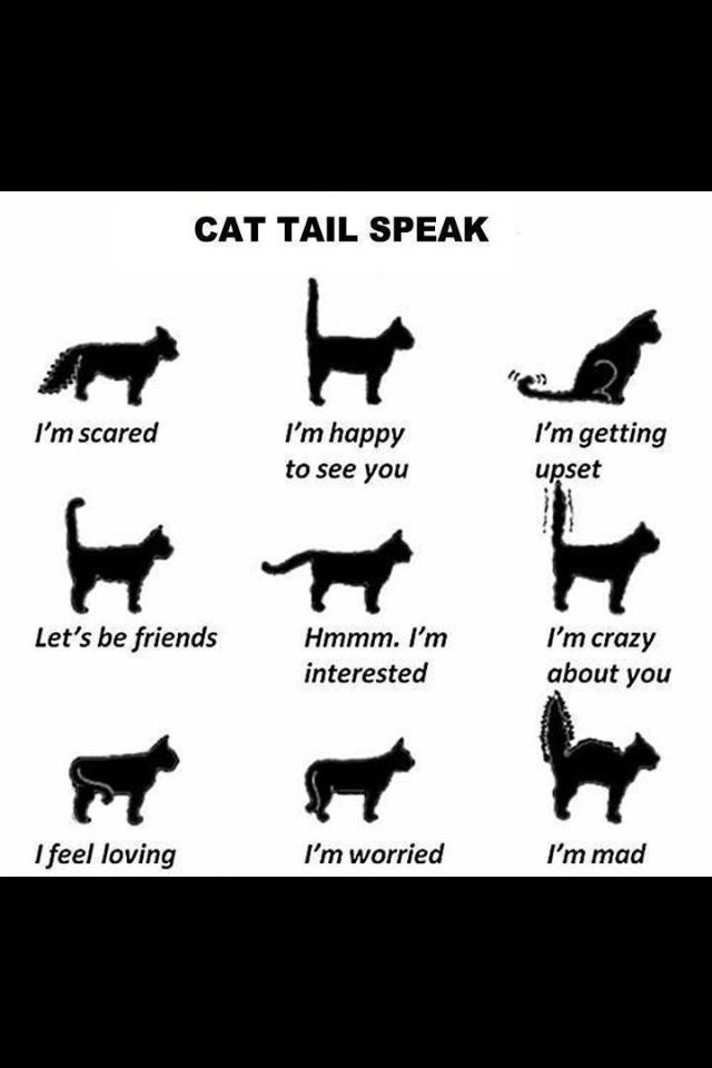 Translating the cat tail