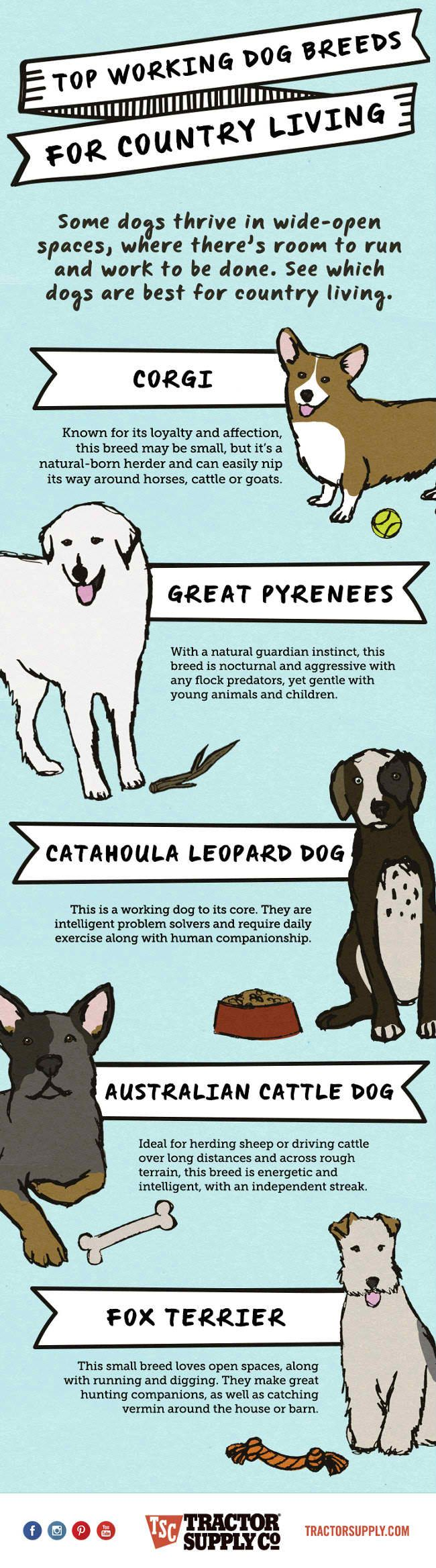 Top Working Dog Breeds For Country Living [Infographic]