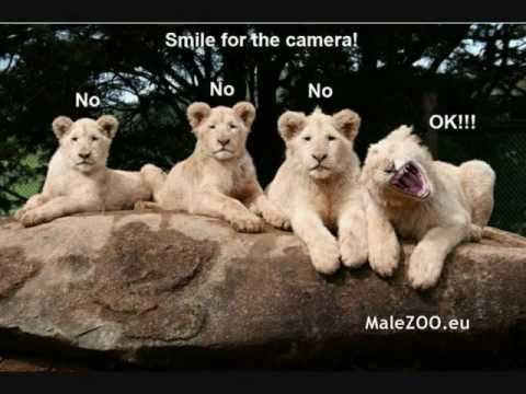 Funny animals :) watching:)