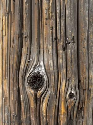 wood grain #8