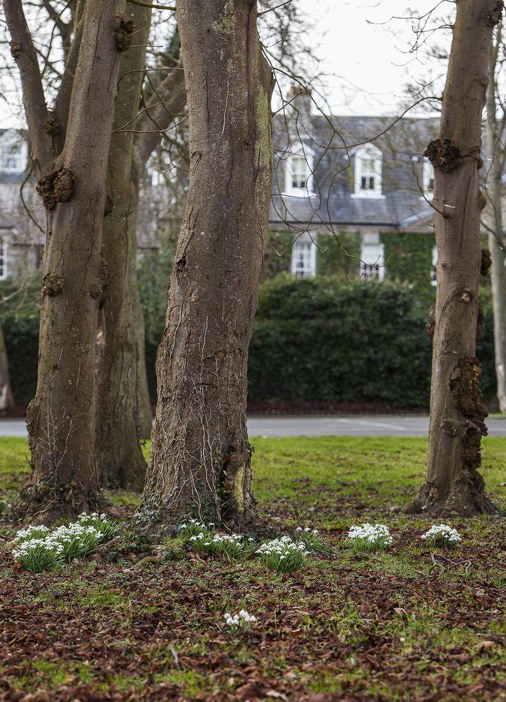 Celbridge Manor gardens