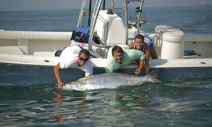 Sanibel island florida tarpon fishing sanibel for Florida tarpon fishing