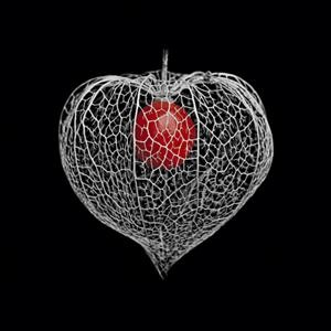 Physalis red ball in a heart cage.   ........... red white black