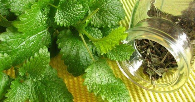 Receptek, és hasznos cikkek oldala: Citromfű, a nyugalom gyógynövénye - A legkiválóbb idegnyugtató és feszültségoldó