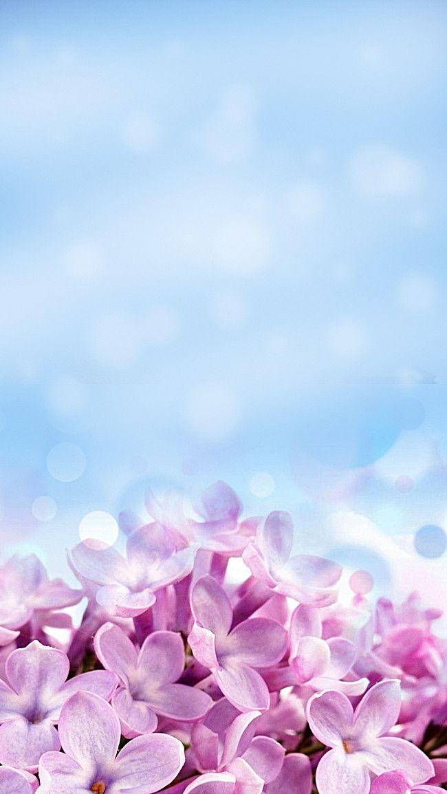 خلفية زهرة بنفسجية جميلة Flores Lindas Flores Fundos Roxos