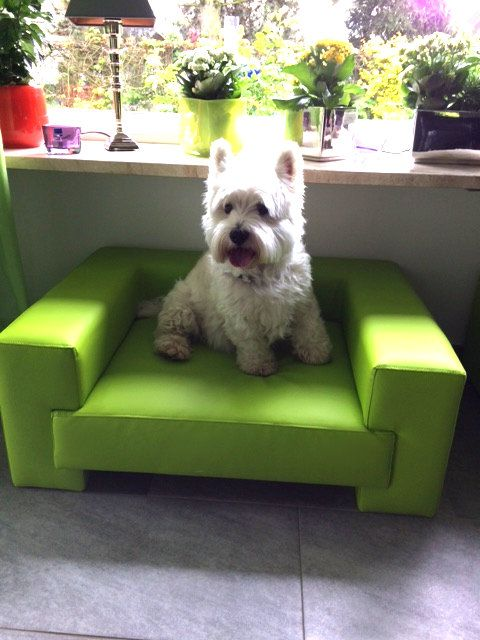 Neu! Kundengalerie Preiswolf24.de - Hundebetten Qualitätsvoll schön und gemütlich