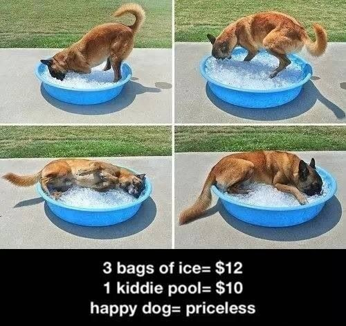Great idea for dogs
