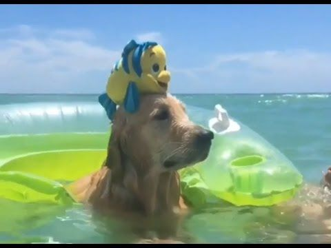 Funny Dogs Videos Latest HD 2017 -  #dog #funnydogs #puppy #doglover #animals #pet #cute #pets #animales #tagsforlikes Stop Your Dog's Behavior Problems! Click HERE to learn how! See videos of cute dogs start : funny dogs funny dogs and cats funny dogs videos funny dogs talking funny dogs 2017 funny dogs fails  - #Dogs