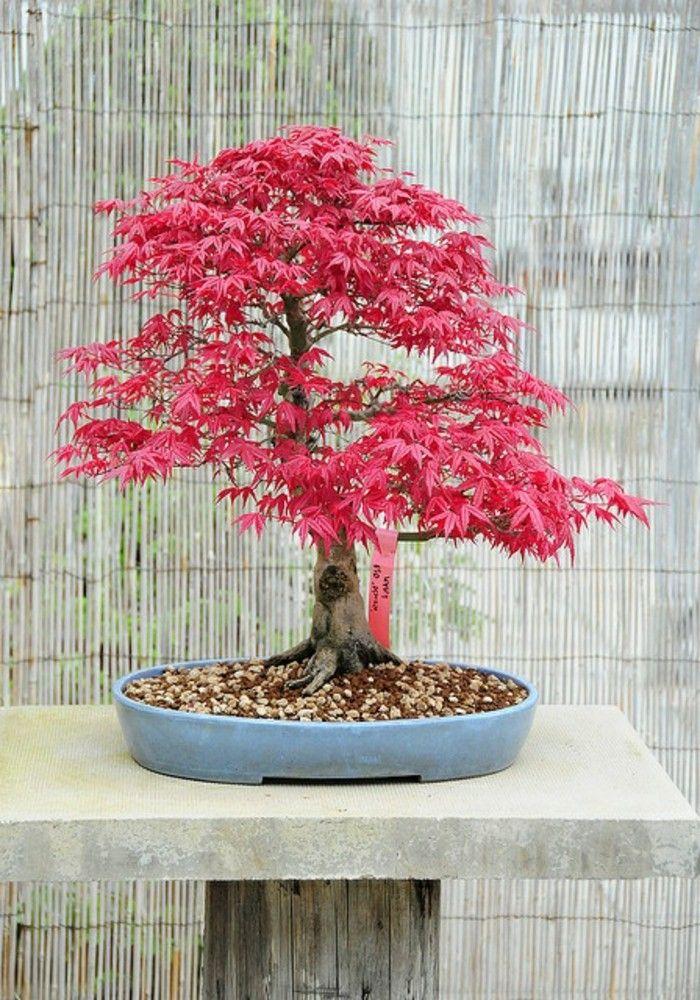 Wunderschone Bonsai Baum Kompositionen Bonsai Baum Bonsai Und