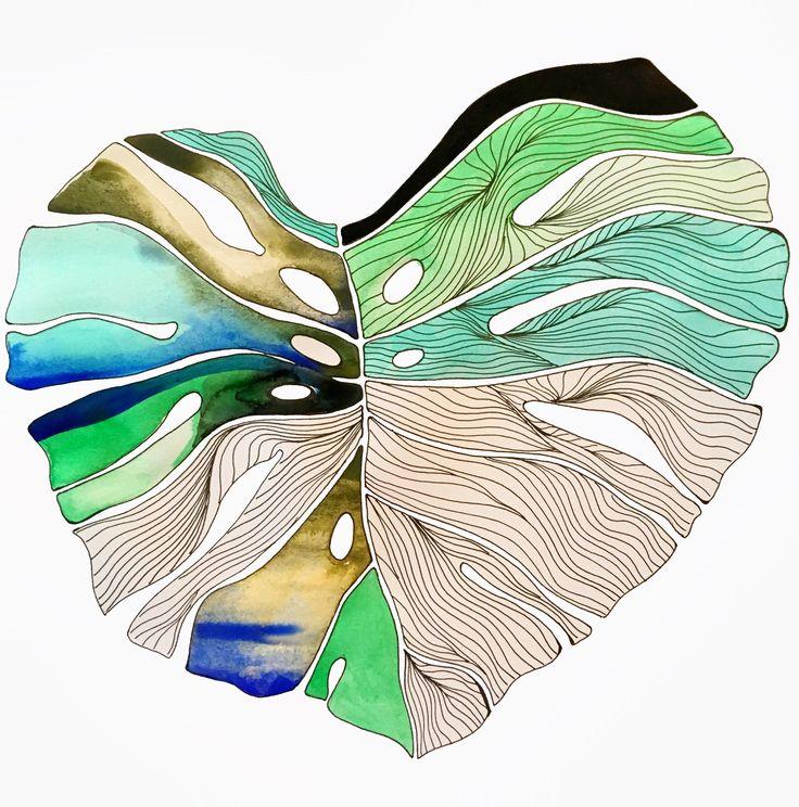 Monstera leaf   Handdrawing Illustration