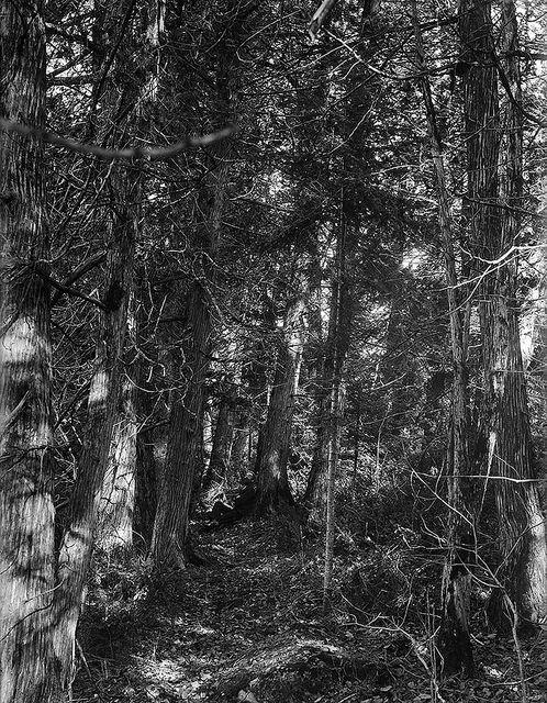 Hiker at ease, Muskoka Lakes, Ontario, circa 1900 / Un randonneur se repose à Muskoka Lakes (Ontario) vers 1900 | by BiblioArchives / LibraryArchives