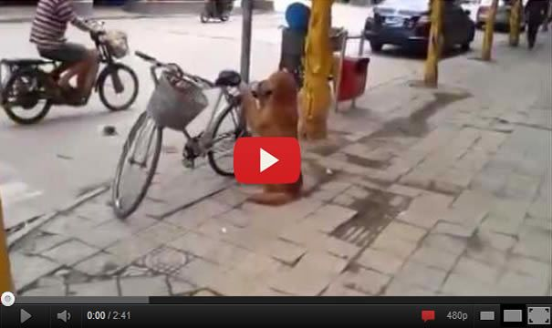 Best Dog Ever – Dog Guards Owner's Bike!