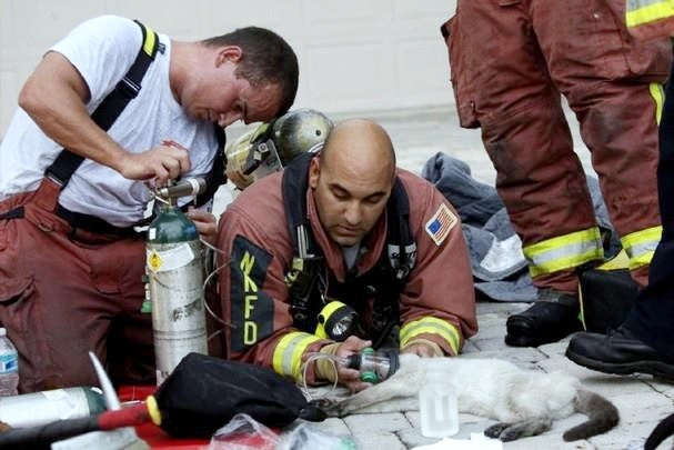 North Naples Firefighters Kevin Bee, left, and Art Rodriguez, hold oxygen to the mouth and nose of Emma, a 17-year-old Siamese cat, before transporting her to a local veterinarian.