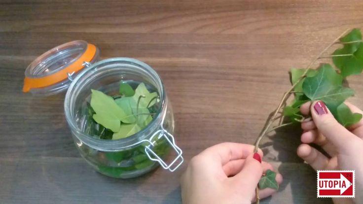 Die im Efeu enthaltenen Saponine machen die Pflanze zu einem natürlichen Waschmittel, was an jeder Hausecke wächst. Mehr Infos: : https://utopia.de/ratgeber/...