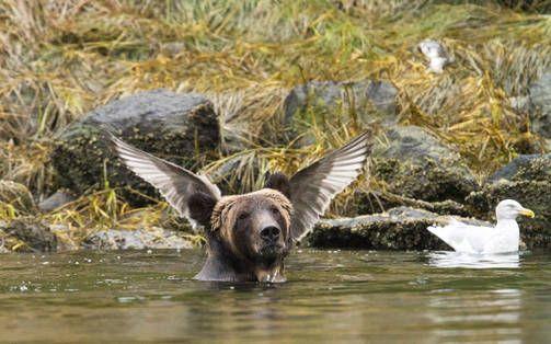 Tässä ovat vuoden 2016 hassuimmat eläinkuvat - valitse suosikkisi!