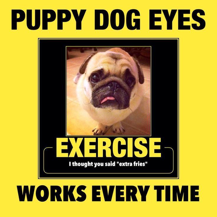 #pug #exercise #workout #puppy #dog #eyes #meme #motivational #poster