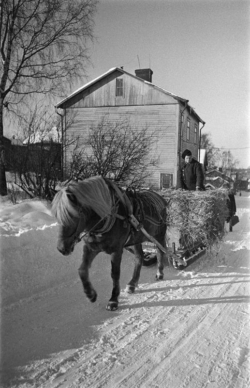 Heinäkuorma ajossa Hermannissa talvella 1950. Kuva: Helsingin kaupunginmuseo / Eino Heinonen.