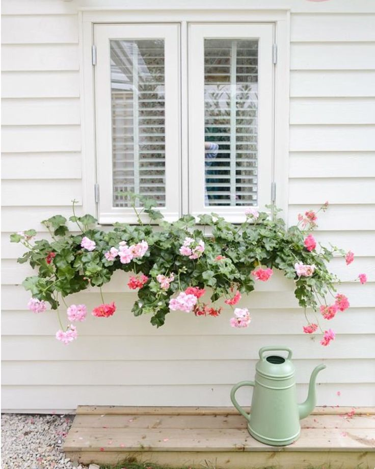 """""""Geraniums!! Who would have thought these daggy old flowers could look so cool Reminds me of my childhood mum had them in pots on our front veranda …"""""""