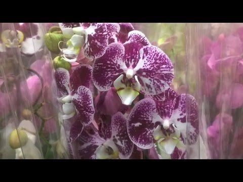 Орхидеи БЕСПЛАТНО - YouTube