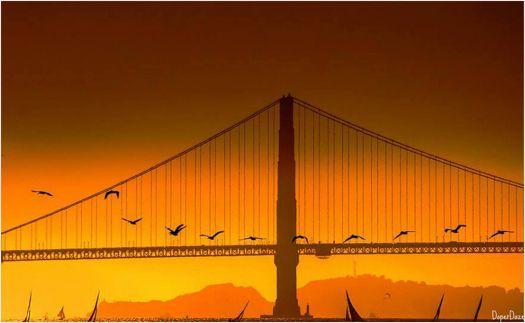 Golden Gate Bridge  (308 pieces)