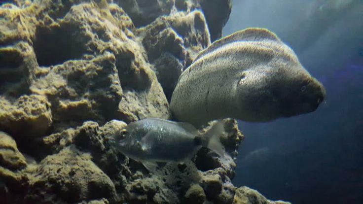 moray eel and reef in aquarium