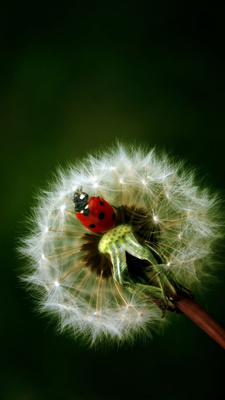 Ladybirds Invade Limpsfield: 17 Best Images About Inscects / LADYBUGS For AYLA BABY On