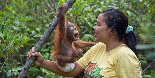Solidaridad y amor: un orfanato para orangutanes en Indonesia