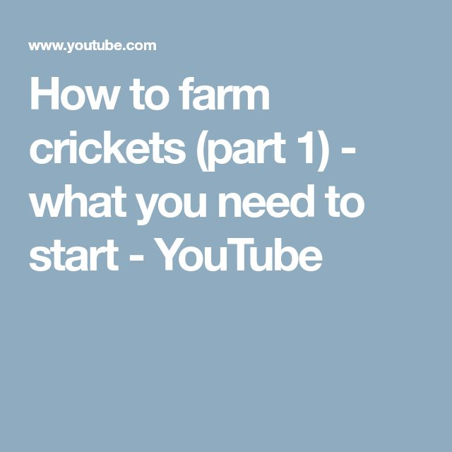 How to farm crickets (part 1) - what you need to start - YouTube