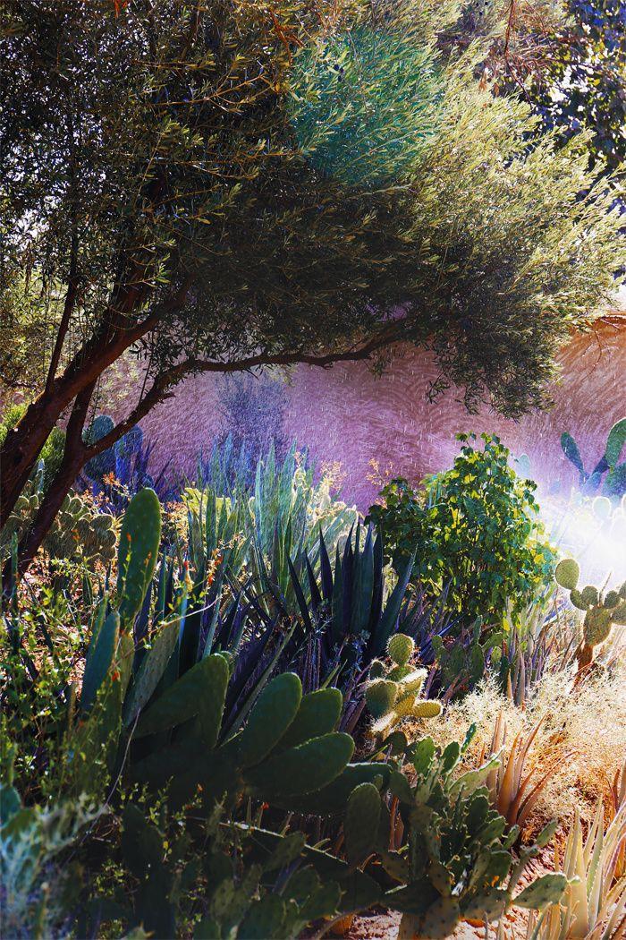 À Taroudant au Maroc, le jardin des Savoyards. Neuf mois après sa plantation, c'est un luxuriant mélange de graminées, succulentes et arbustes. Comme tout jardin aride, il a été arrosé généreusement pour développer son système racinaire dans les quelques mois suivant sa plantation / © Marie Taillefer