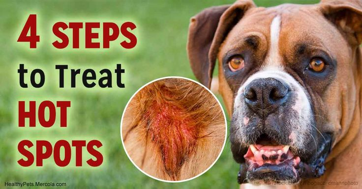 Hot Spot Remover For Dogs