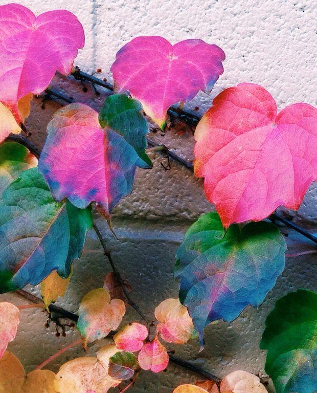 leaves-justinablakeney