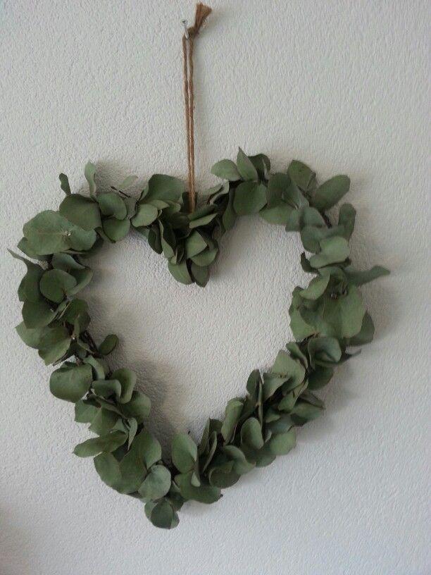 Eucalyptus hart