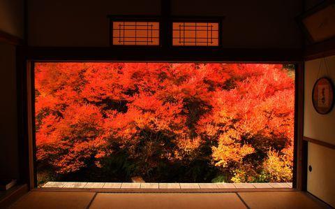 兵庫県豊岡市但東町の相田集落にある「安国寺」は、知る人ぞ知る兵庫の隠れた紅葉の名所です。「安国寺」では、樹齢約150年といわれるドウダンツツジの紅葉が有名で、本堂から座敷越しに深紅に染まる美しいドウダンツツジを見ると、まるで1枚の額物の絵画を見ているよう!一度は見ておきたいドウダンツツジの燃えるような紅葉をご紹介しましょう。