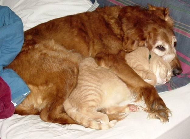 1000 id es sur le th me chat contre chien sur pinterest chien dr le honteux chats dr les et. Black Bedroom Furniture Sets. Home Design Ideas
