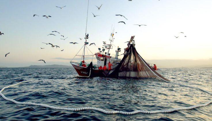La pesca en Tamaulipas con gran demanda de consumo nacional.