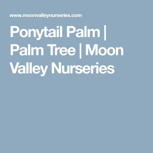 Ponytail Palm | Palm Tree | Moon Valley Nurseries