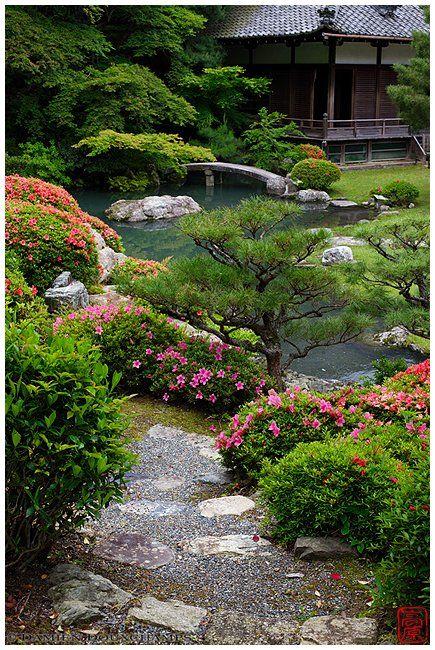Rhododendrons in bloom, Shoren-in temple gardens | Photograph by Damien Douxchamps