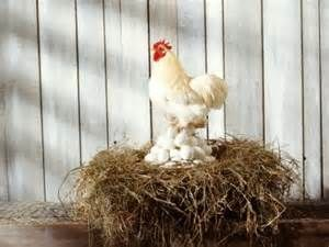 Pesquisa Formas de chocar ovos de galinha. Vistas 19421.