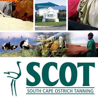 SCOT is a leading innovative #ostrichleather #tannery. Thus, SCOT can offer designers and manufacturers a quality and distinctive product. A state-of-the art distribution system allows customers to order and receive skins quickly and efficiently. Contact us now to discuss your specific ostrich leather requirements!