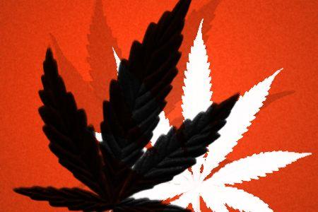 Cannabis Leaf Brushes by freddywang