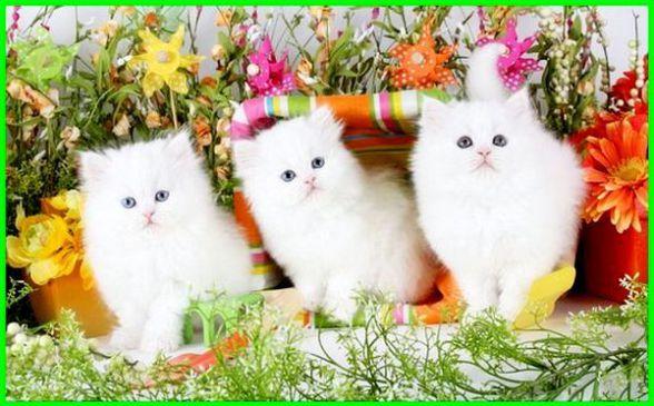 Gambar Kucing Lucu Imut Dan Paling Menggemaskan Sedunia Gambar Kucing Lucu Kucing Bayi Cute Kittens
