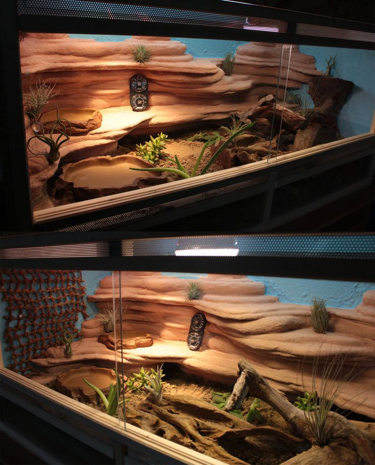my first terrarium for a bearded dragon :3