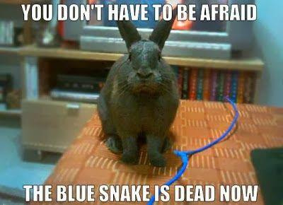 Bunny meme   Rabbit Ramblings: Funny Bunny Memes