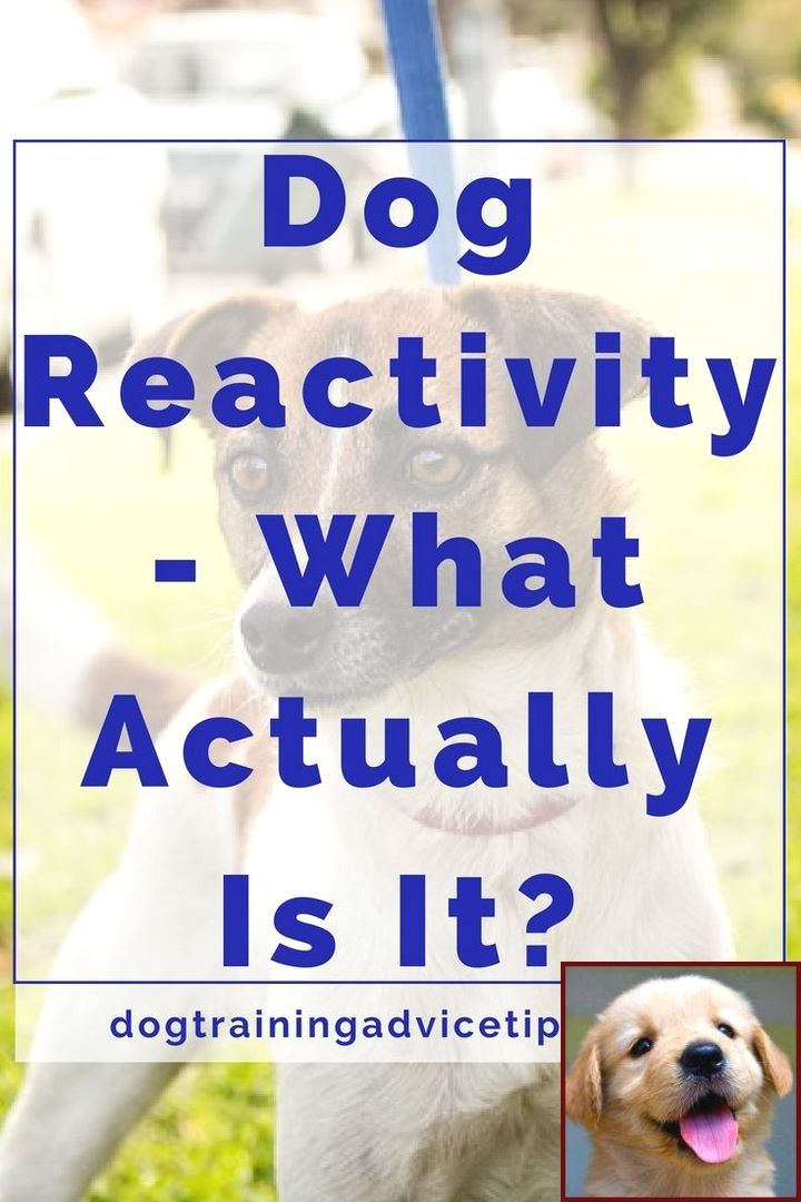Dog Behavior Observations And Clicker Training Dogs Youtube Dog