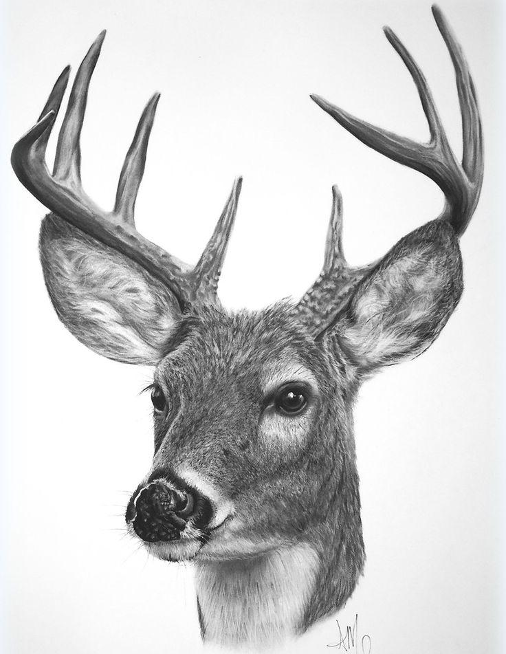 White Tailed Buck Sold Prints Start At 15 Deer Drawing Deer Art Deer Artwork
