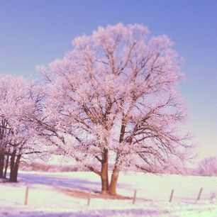 truly_you_life_coaching (Lynda Dobbin-turner) on Instagram  Early morning #Frost on the trees near #Lavenham