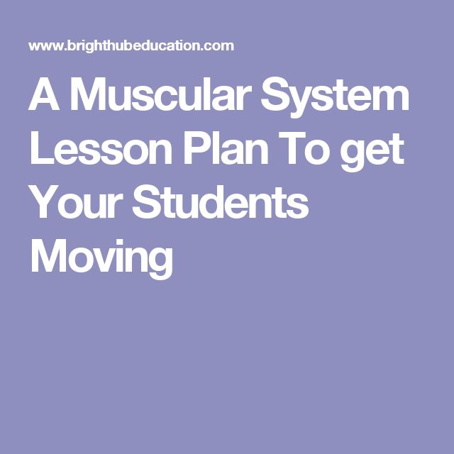 best muscular system ideas human muscle anatomy  a muscular system lesson plan to get your students moving