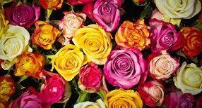 Qualities of a Best #Florist #pascoevale #flowerdelivery #melbourne
