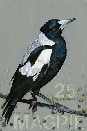 Australian Magpie Original acrylic painting by Angie Carrier