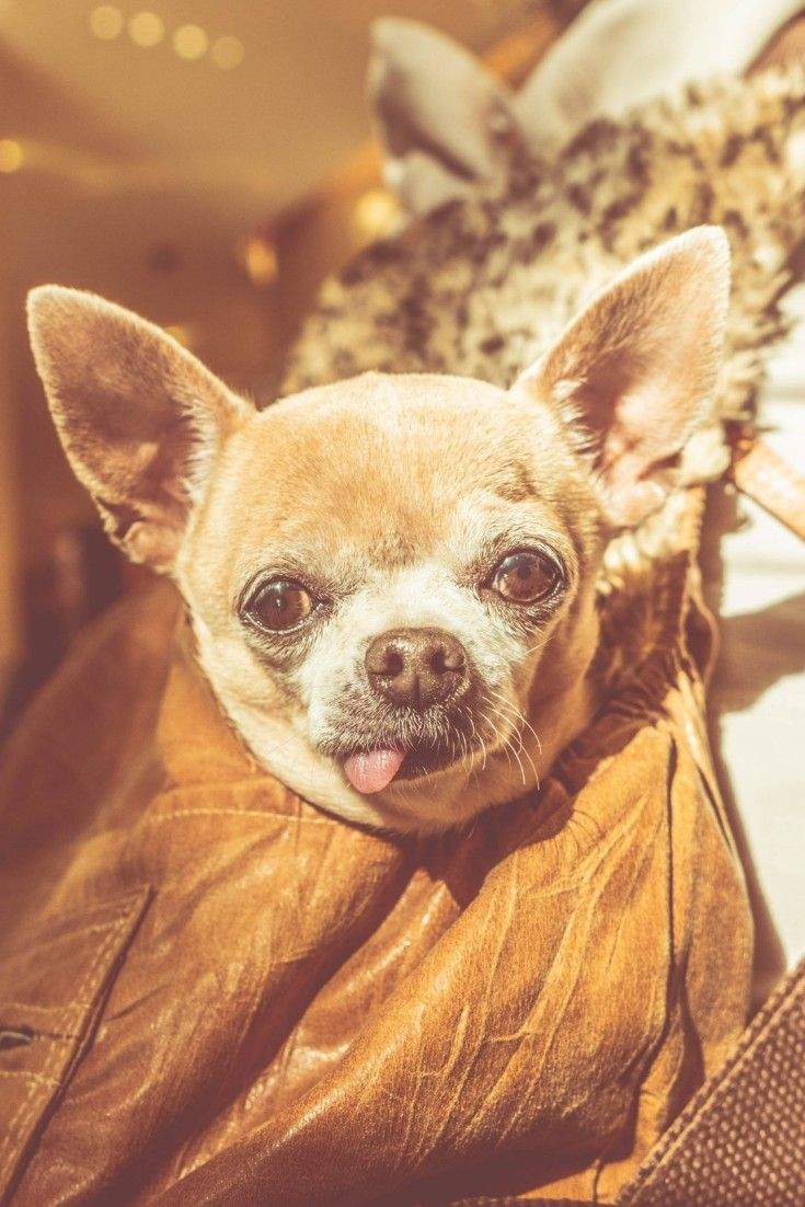 Top 20 Cutest Dog Breeds Around The World Pet Care Cats Pet